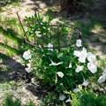 Опора для растений 57-906 - фото 56427